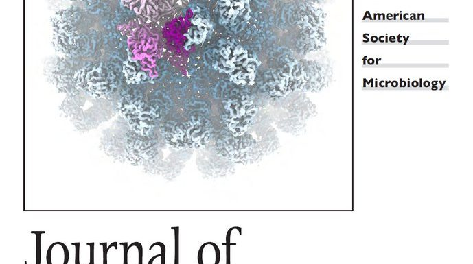 Cover of the Journal of Virology, showing a cryoEM structure of vesivirus 2117